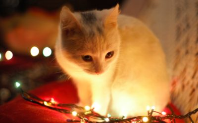 Keeping Your Pet Safe and Comfortable During the Holidays