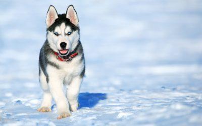 Winter Precautions for Pets