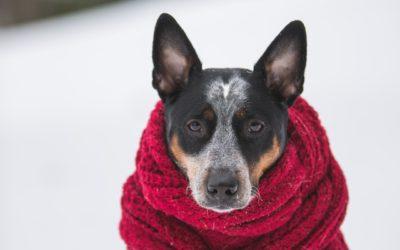 Winter Dog Walking Safety Tips